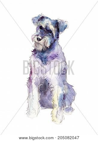Miniature schnauzer isolated on white background watercolor illustration.