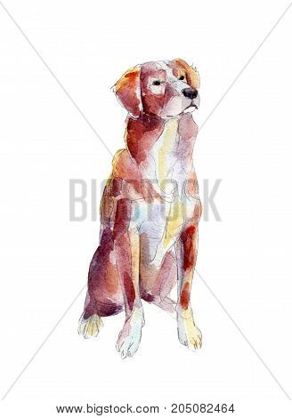 Retriever isolated on white background watercolor illustration.