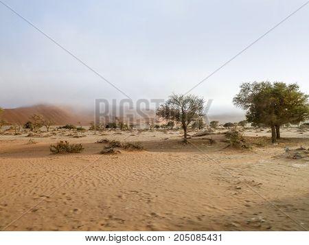 foggy desert landscape seen in Namibia Africa