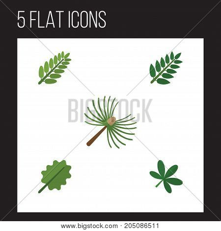 Flat Icon Nature Set Of Alder, Rosemary, Acacia Leaf And Other Vector Objects