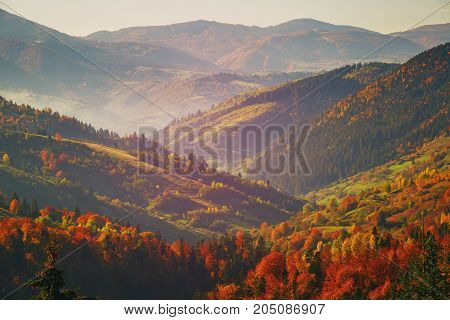 Autumn Mountain Forest. The forest is late autumn. Autumn mountain landscape. Sunny autumn in the mountains. Vacation and travel concept