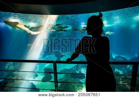 Caucasian blonde woman looking at fishes and leopard shark in oceanarium.Silhouette of female tourist enjoying in ocean exhibit tank. Lisbon, Portugal. Tourism, holidays, lifestyle and leisure concept