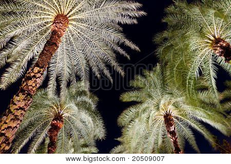Tropical Palm Trees at Night