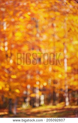 Abstract background, bokeh yellow autumn forest, autumn time