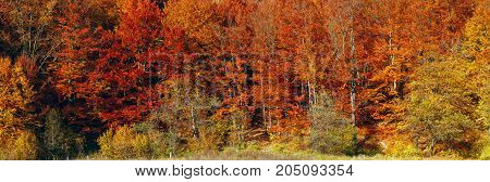 beautiful Landscape, Colorful and bright autumn forest, panorama