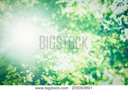 green leaves and blur with sunlight flare nature background
