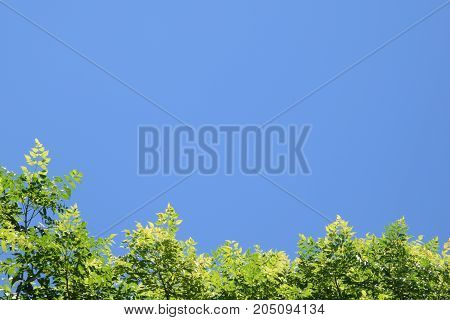 Bright green leaves against blue sky at the bottom of the frame, copy space using as background or wallpaper design