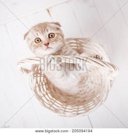 Red kitten in a wicker basket. Funny playful cat. The cat looks and stretches the paw to the camera. Cat background. Picture for a calendar with cats.