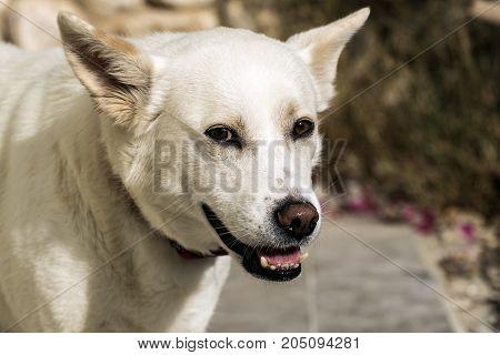 White very kind dog with a smile Mona Lisa