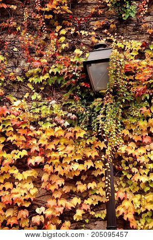 Street lantern in front of stone wall with grape vine red leaves Paris. Montmartre France