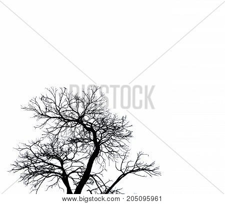 Silhouette dead tree isolated on white background for scary or death with clipping path.