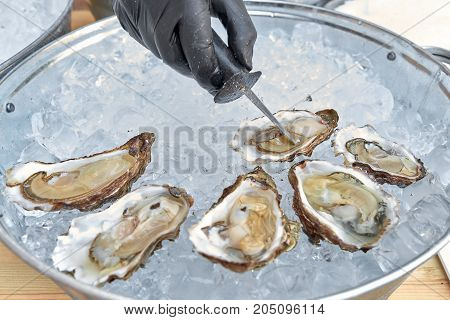 Fresh oyster is open on ice, knife in hand