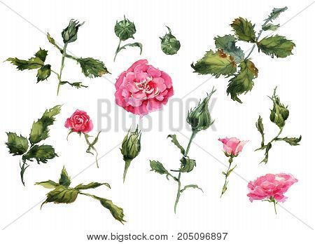 Flowers, leaves of handmade pattern wild roses. Briar, watercolor painting for decoration