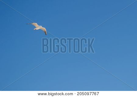 A small seagull hovers in the clear sky