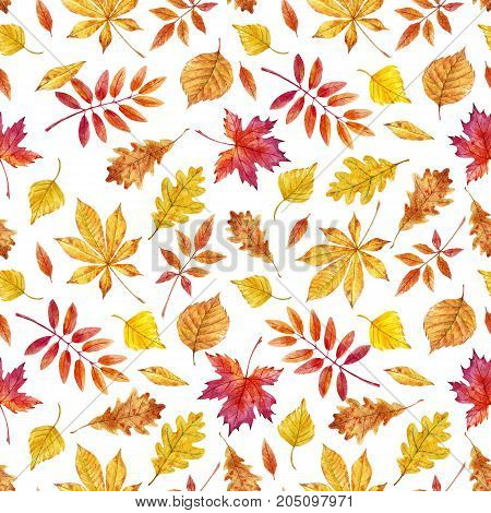 Beautiful seamless pattern with watercolor autumn leaves