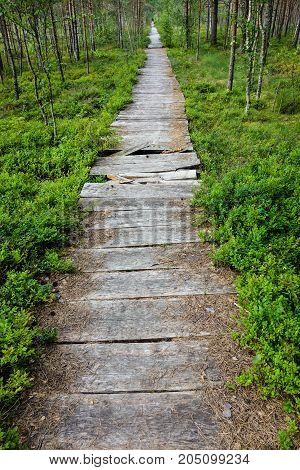 Nature hiking trail in summer with broken wooden boards