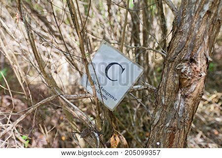 GRAND CAYMAN ISLAND - AUGUST 18 2017: Sign of Black Mangrove Skeletons part of Mastic Trail. Mastic Trail is a forest walking path in Mastic Reserve of Grand Cayman Cayman Islands