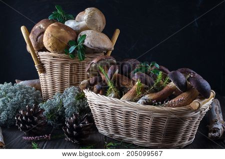 Fresh mushrooms in basket, boletus harvested in  the forest on dark wooden background.