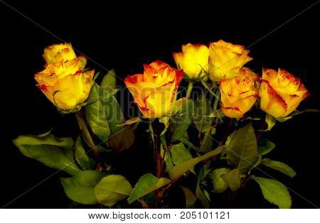 Bouquet of orange roses on a black background