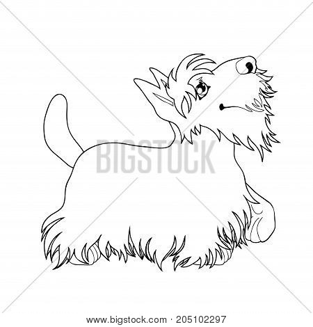The cute puppy of a dog of Scottish Terrier costs looking up and having raised a pad. A contour line vector illustration separately on white, page coloring book, square.