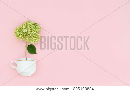summer card a green branch of Hydrangea flower in a cup on a pink background