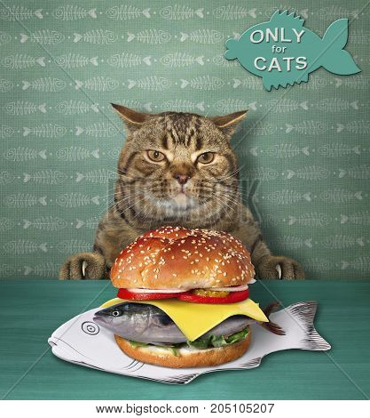 The cat is sitting in front of a plate with a fish burger.