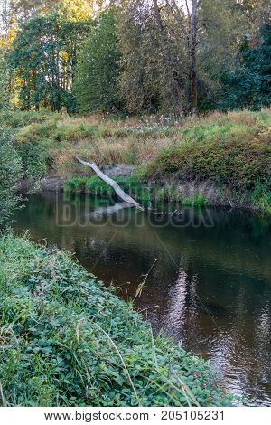A log sticks up near shore on the Green River in Kent Washington.