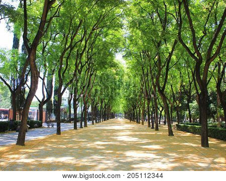 Park alley way view with colorful green trees on summer day sunny background. Sunlight shines through upper branches of tree leaves on wide empty walkaway. No people scene with blank middle space.