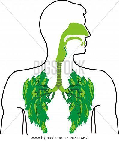 Green lung - a breath of fresh air