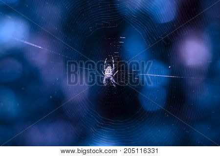 natural background spider and web is highlighted at night