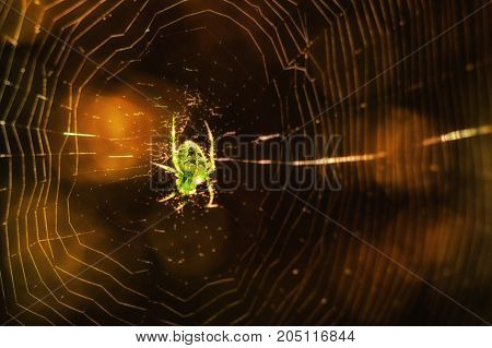 fantastic natural background a bright spider with patterns on its back sitting on a cobweb in an autumn forest