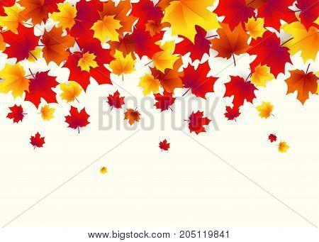 Vector illustration of autumn border background with falling multi colored maple leaves like leaf fall in bright flat style isolated on white background