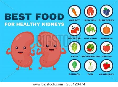 Best food for strong kidneys. Strong healthy kidneys character. Vector flat cartoon illustration icon. Isolated on blue backgound. Health food, diet, products, nutrition, nutriment infographic concept
