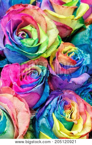 Watercolor colorful painting roses flowers abstract background