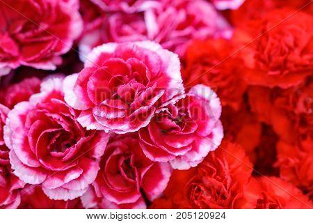 Beautiful flowers background for wedding scene. Beautiful flowers background decoration for wedding scene