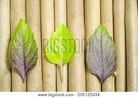 Multicolored basil leaves lie on a background of maple sticks.