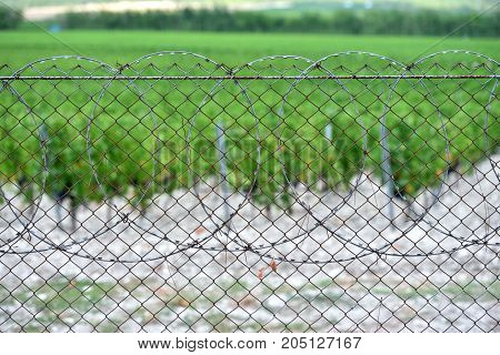 Fence From The Grid Encloses The Vine Field Next To The Mountains