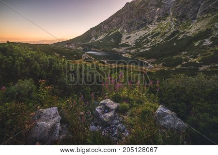 Mountain Lake at Sunset with Flowers and Rocks in Foreground. Velicke Tarn High Tatras Slovakia.