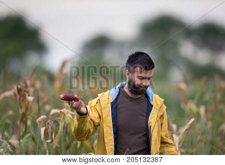 Farmer Showing Corn Cob With Disease
