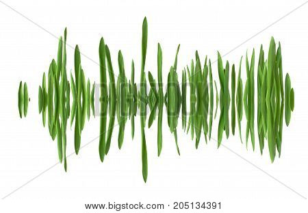 Blades of grass in a row mirrored as if in water creating the appearance of a soundwave. Isolated on white background.