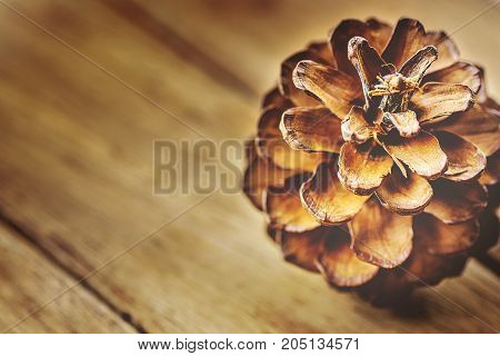 Big Pine Cone on Plank Aged Wood Background. Warm Color Toned Image. Christmas New Year Greeting Card Poster Template. Winter Autumn. Copy Space for Text.