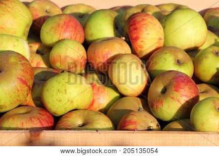 Crate of red and yellow apples after harvest during autumn