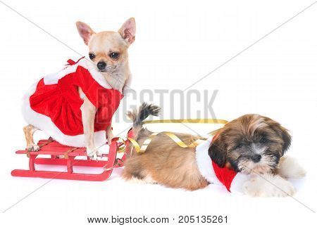 dogs and christmas decoration in front of white background