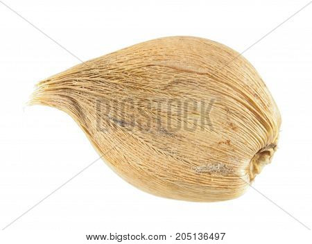 Bulb of Dwarf Iris (Iris reticulata) isolated on white background