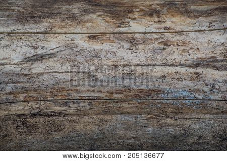 Wood background texture surface panel board wall