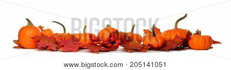 Long Border Of Mini Pumpkins And Red Fall Leaves Isolated On A White Background