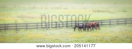 Three horses grazing in a fog filled field in northern Virginia.