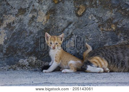 homeless cat living on istanbul street photography