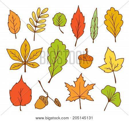 doodle leaves vector hand drawn outline set