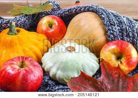 Harvest Of Apples, Pumpkins, Squash In A Gray Cozy Scarf. Autumn, Cold.